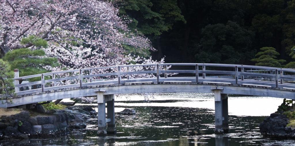 浜離宮の桜 のコピー