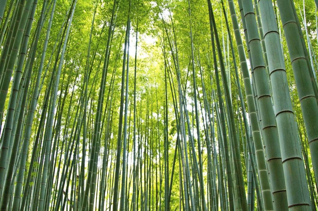 お寺の竹林と日差し